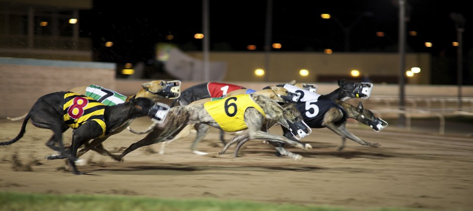 Dog track betting for dummies ganguly best betting