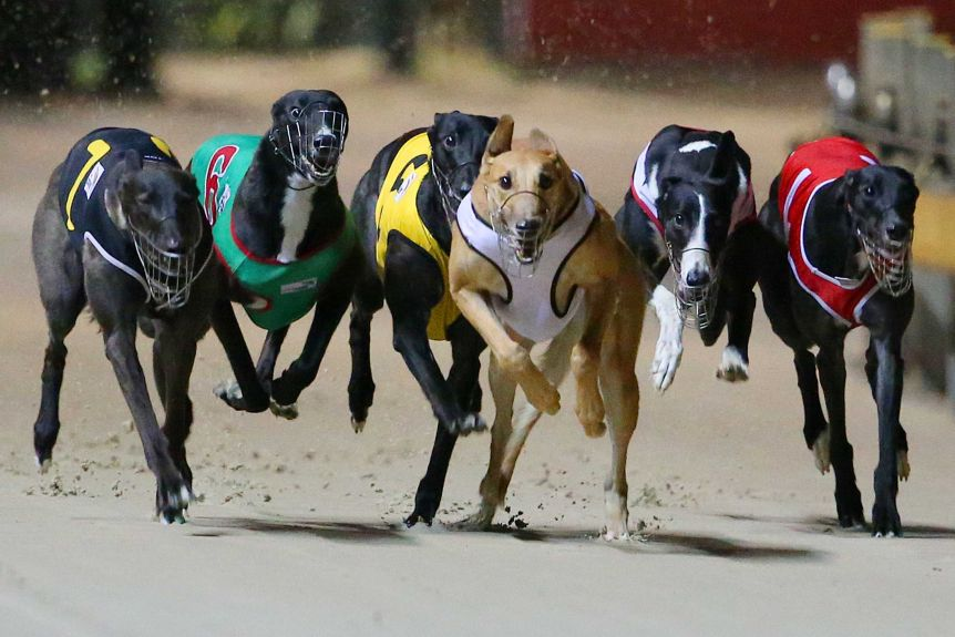 Greyhound Racing Betting Tips