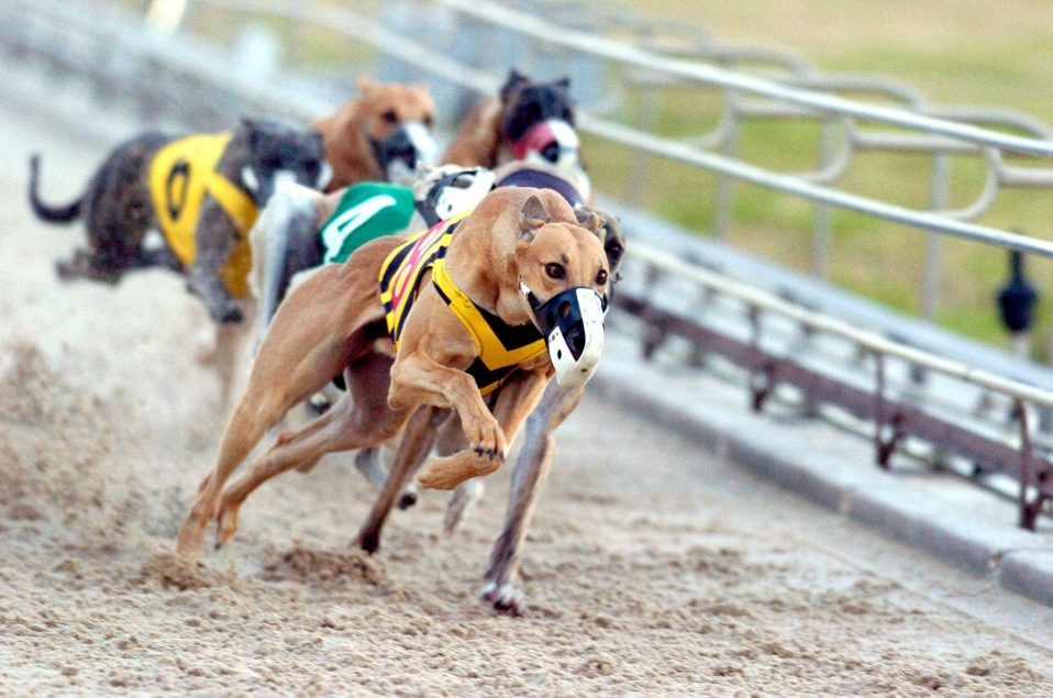 Dog racing betting rules mintpal exchange cryptocurrency address