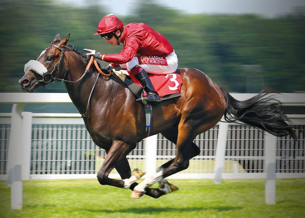 Horce Racing Jokey HD